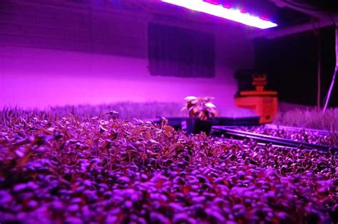 Growing Lights by Spectrum Ufo Led Grow Light 135w Equivalent