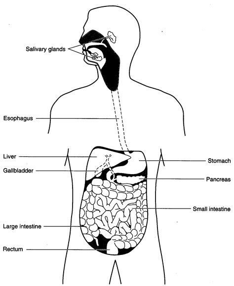 Digestive System Diagram Worksheet by The World S Catalog Of Ideas