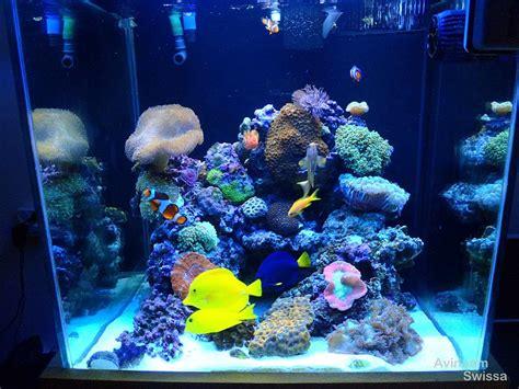 is lighting the reef tank with fluorescent lighting orphek reef aquarium lighting