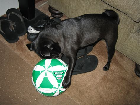pug soccer world cup time about pug