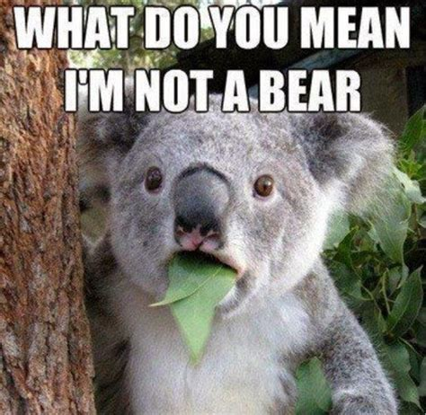 Funny Australia Day Memes - 13 best images about anniversary blog hop on pinterest