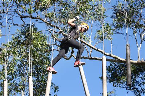 tree tops treetop adventure park treetops sydney central coast
