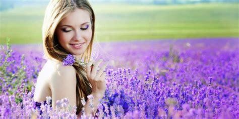 menanam lavender hidroponik kreasi gardena mengenal si ungu wangi yang menawan hati