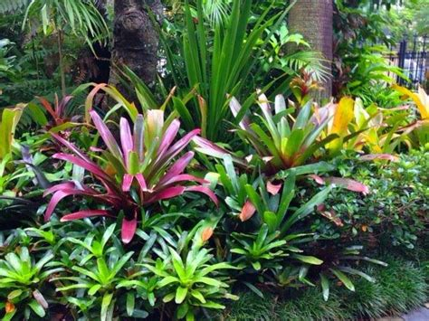Landscaping Photo Gallery Subtropical Garden Design Ideas