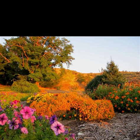 Botanical Gardens Boise Idaho by 1000 Images About Boise At Its Best On Parks