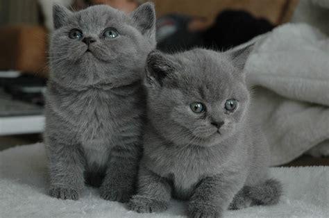 Jual Kater free photo cat cat cats pet grey free image