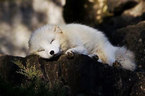 Fã R Was Benutzt Ein Bd by Nur Noch Ein Kleines Schl 228 Fchen Foto Bild Tiere Zoo