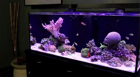 stunner led aquarium light strips 29 best images about ecoxotic led stunner strips on