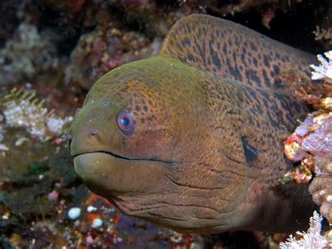 Moray Eel | scott macleod s anthropology of information technology