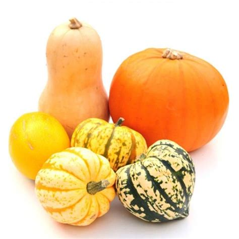 pumpkin facts 8 facts about pumpkin that will your gourd