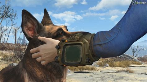 Motorradbrille Hund by Fallout 4 Outfit F 252 R Treuen Dogmeat Begleiter