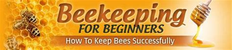Raising Honey Bees Honey Bees Farming Raising Honey How To Raise Bees In Your Backyard