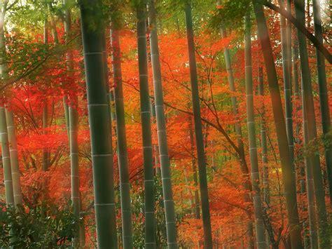 wallpaper for walls japan bamboo wallpaper bamboo wallpapers collection 20 30
