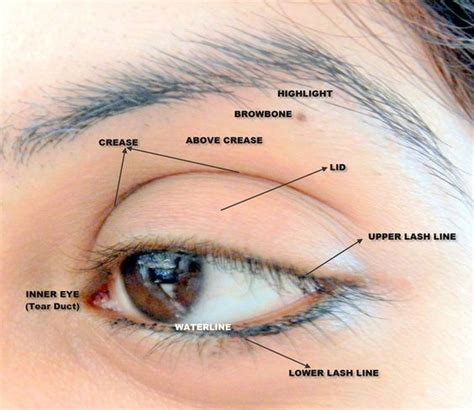 eyeshadow diagram parts of eye for makeup search make up