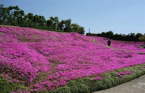 giardino sempre fiorito il giardino pi 249 romantico mondo costruito per