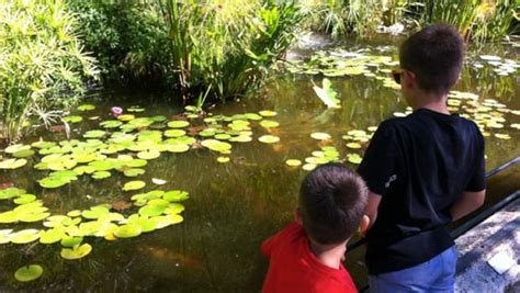 work abroad in exchange for room and board au pair new zealand 5 travel abroad interexchange