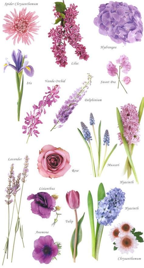names of purple 25 best ideas about purple flower names on pinterest