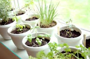 Growing Herbs On Windowsill Two And A Farm Windowsill Gardens And Plants
