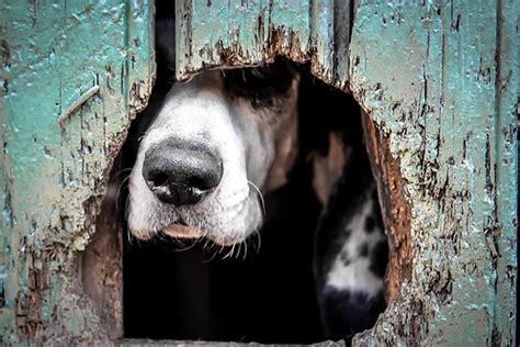 welche teppiche sind für hunde geeignet herzlich willkommen