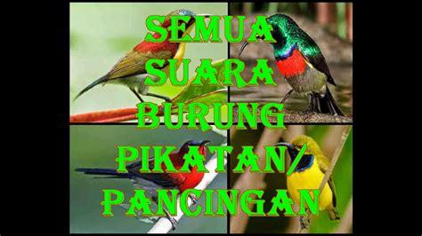 download mp3 suara adzan indonesia download suara pikat semua jenis burung mp3 mp4 3gp flv