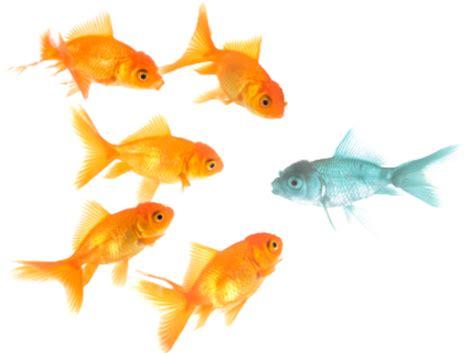 imagenes en png de animales peces png imagui