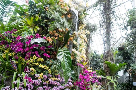 images of botanical garden a show of 6 000 orchids celebrates a era