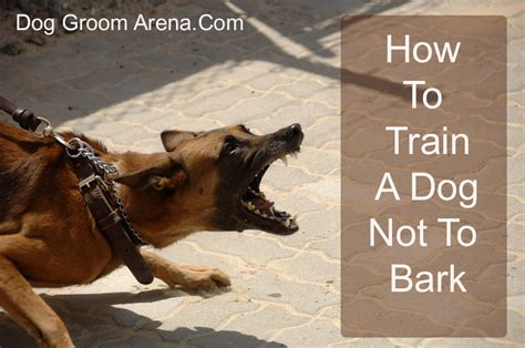 how to teach a not to bark how to a not to bark welcome to grooming