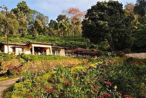 Sb Cottage Munnar by Olive Brook From Below Picture Of Olive Brook Munnar Tripadvisor