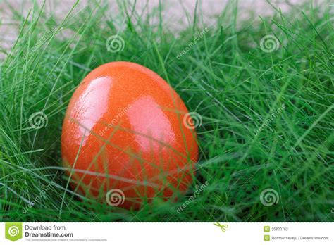 orange easter egg on green grass stock photography image