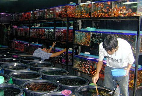 Kulkas Murah Di Jakarta 8 tempat belanja murah dan unik di jakarta pasangan cerdas