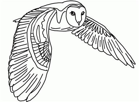 pictures of owls to color flying owl coloring pages coloring home