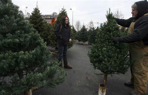 avoid a sticky situation with proper christmas tree care