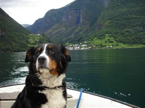 herding dogs the herding dogs breeds picture