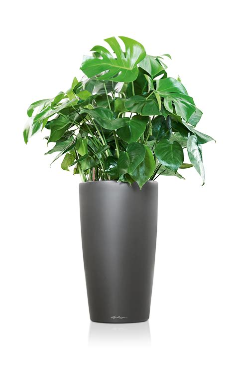 self water planter lechuza rondo self watering planter metropolitan