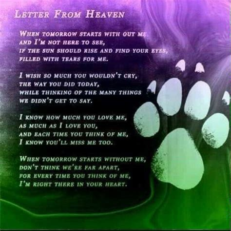 pets in heaven gift for owners tears of a thousand tomorrows juliette letter from heaven words to live by quotes