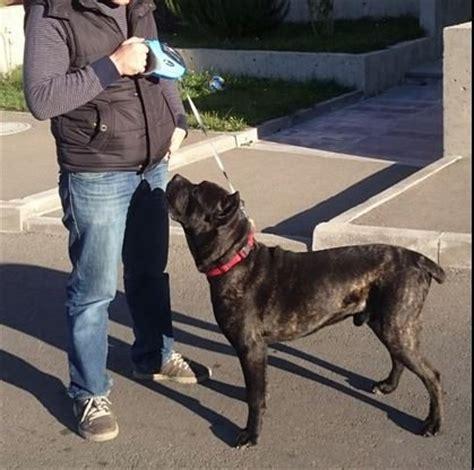 retractable leash for large dogs retractable leash taotronics pet leash lead 16ft