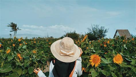 destinasi kebun bunga matahari objek wisata