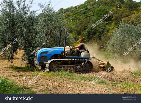 Garden Grove Lawnmower Inc Weeding Milling Olive Grove Crawler Tractor Stock Photo