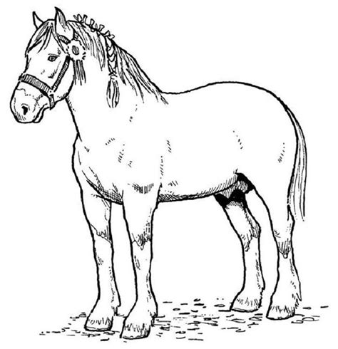 horse coloring pages that you can print horse template animal templates free premium templates