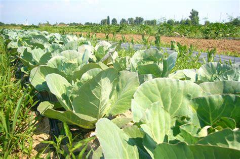alimentazione biodinamica benessere archivi biolatina prodotti biologici e