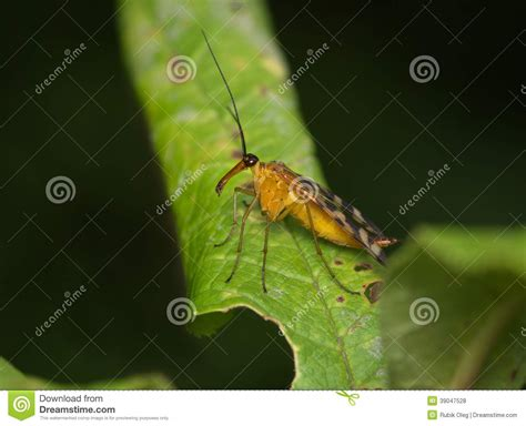 flying with a large large fly with a nose stock photo image 39047528