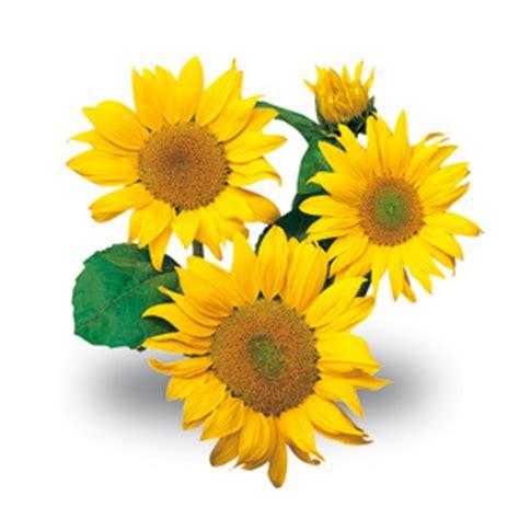 specie fiori fiori da recidere variet 224 e consigli sulla coltivazione