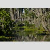 Alligator+Swamp+Scenes Alligator+Swamp+Scenes Email This BlogThis ...