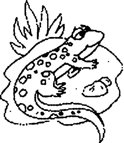 animal lizard coloring sheet for print