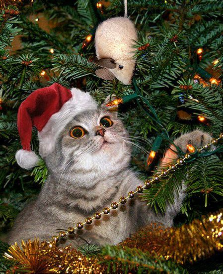 holiday cheer pets stuck in christmas trees