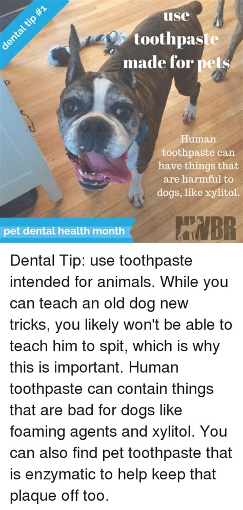 can you use human toothpaste on dogs 25 best memes about dogs new tricks dogs new tricks memes