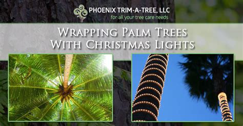 wrapping palm trees with x method for holiday lighting wrapping palm trees with lights trim a tree