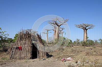 Hutte Africaine Interieur by Hutte Africaine Avec Des Baobabs Photos Stock Image