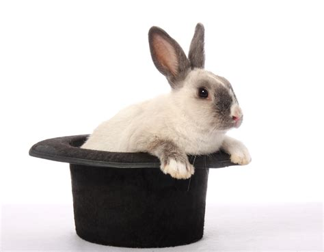 Magic Rabbit by Magic Rabbit Thepix Info