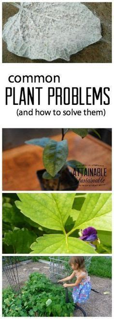 common houseplant problems gardens cas and planting vegetables on